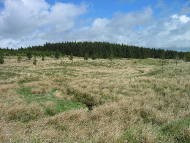 Valley of Middle Burn, Wark Forest