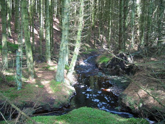 Greenlee Burn, Wark Forest