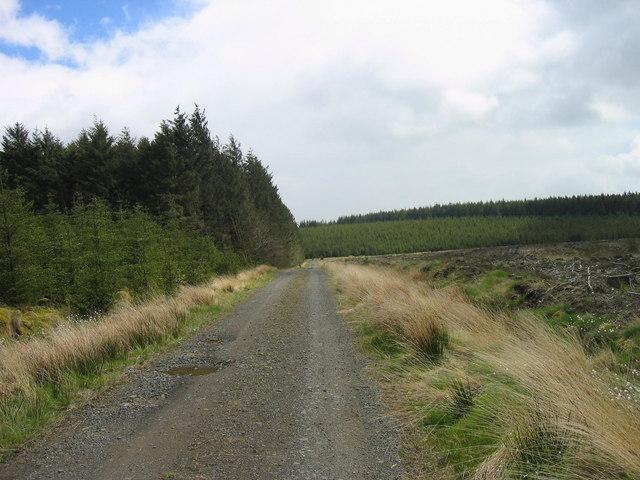 Wark Forest near Little Crag