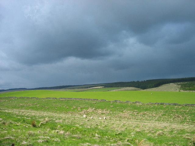 Farmland near Inner Butt Hill, Wark Forest