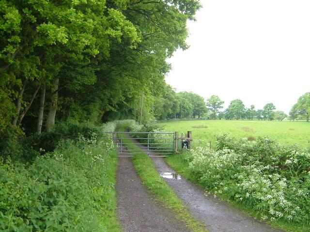 Track beside Butcher Wood, near Bethersden