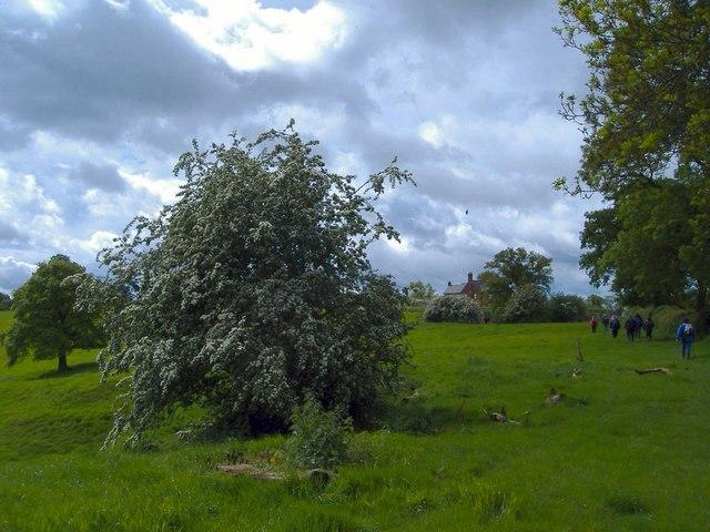 Buerton Farm
