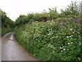 SW5830 : Roadside in May by Sheila Russell