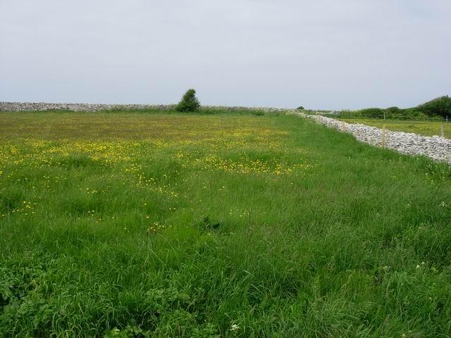 Top Fields