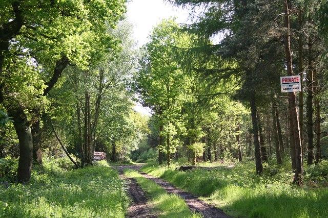 Gilbert's Wood