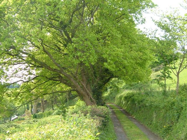 Footpath from Neadon Lane to Pound lane