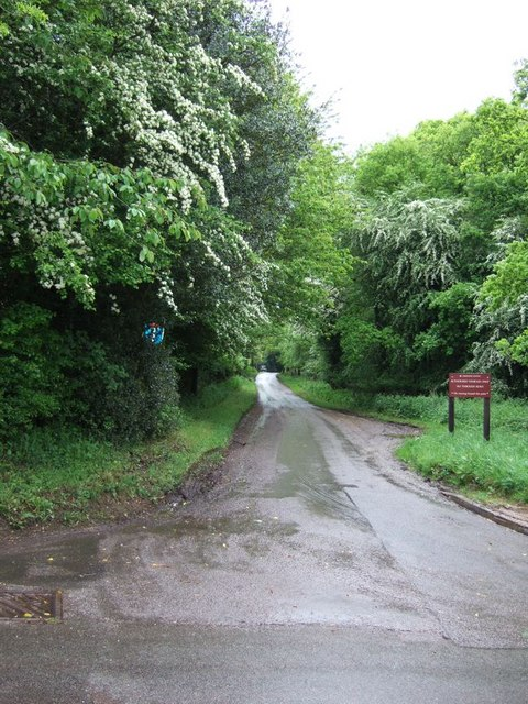 Ashridge Estate lane at Hudnall