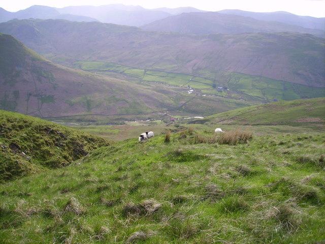Sheep and Lamb Mere Beck
