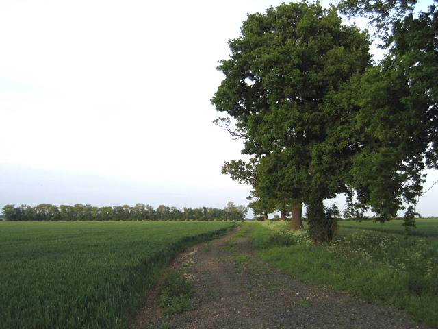 Oak-lined farm track, Deadman's Cross, Beds
