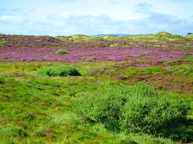 Sands of Forvie National Nature Reserve