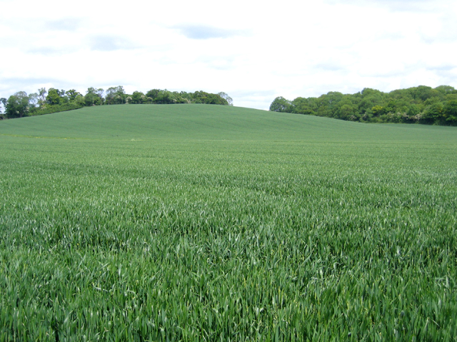 Farmland, Shefford, Beds