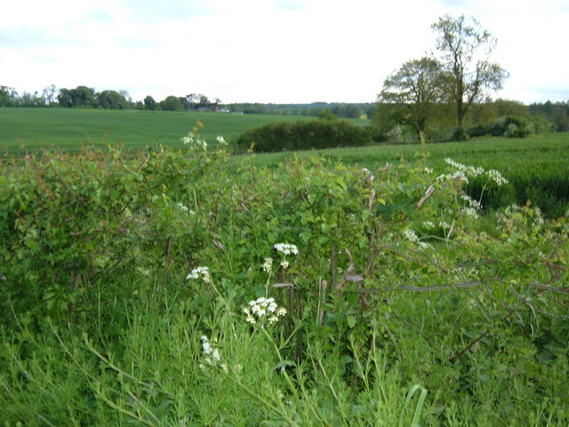 Hedgerow and fields from the Naseby Road
