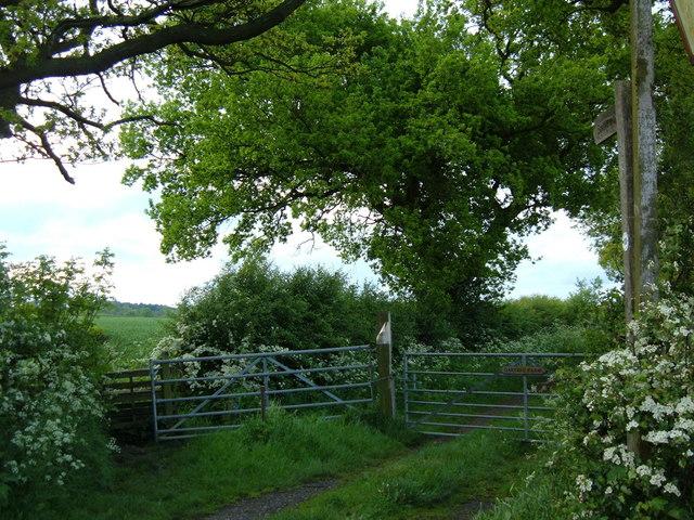 Oak Tree at the bottom of Oak Tree Farm road