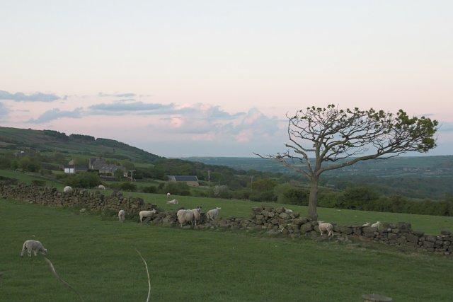 Grazing Land East of Egton