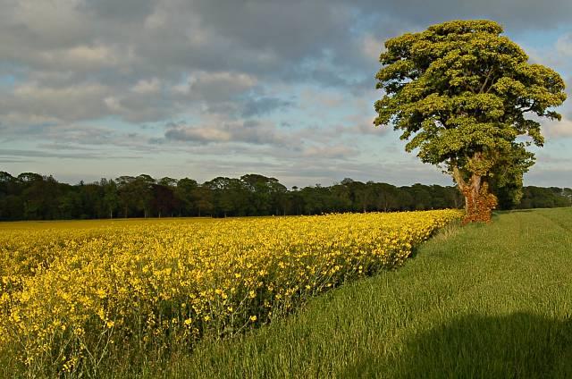 Field by Abercrombie