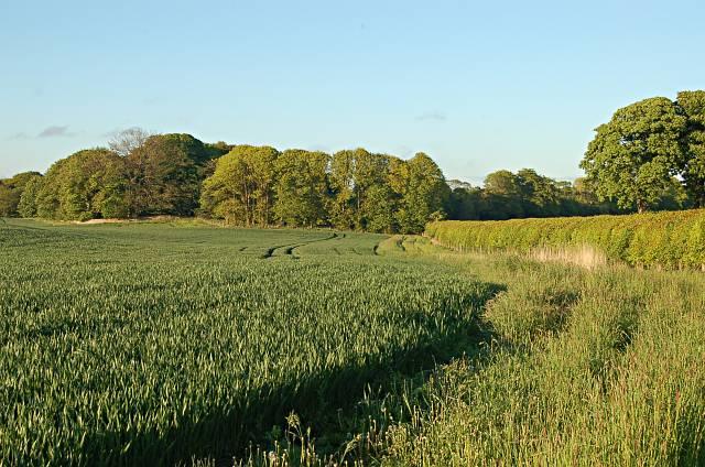 Farmland by Stenton
