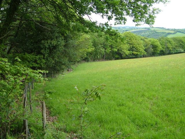 Field beside Bridford Wood