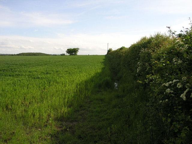 Footpath to Caunton