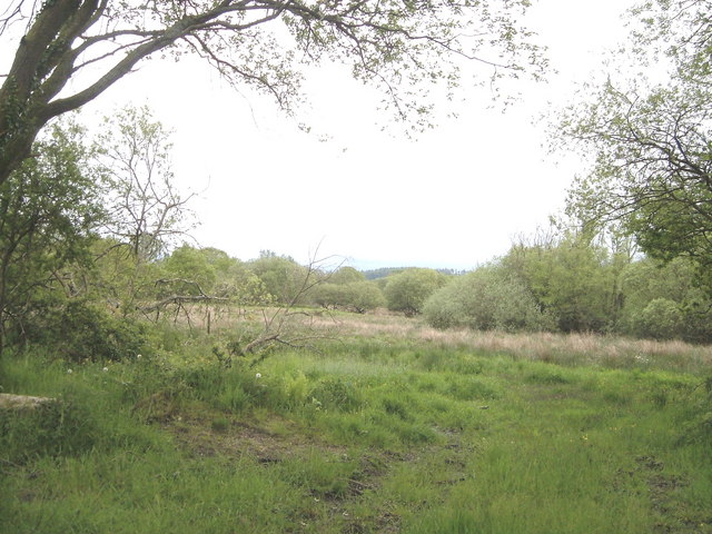 Heathland near Plaistow Green