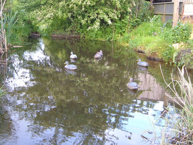 Wooden decoy ducks at Woodlands