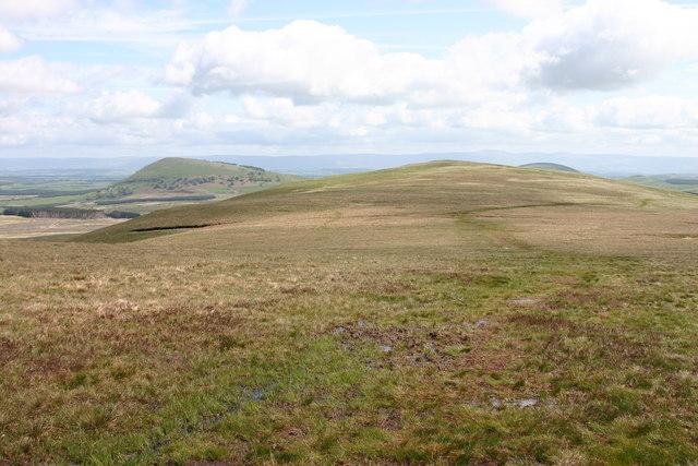 Bruts Moss