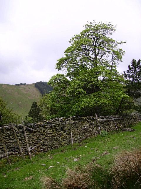 Old Plantation Cawdale