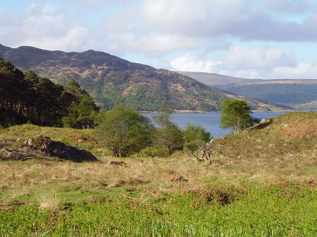 Bracken taking over, near Dùn Ghallain