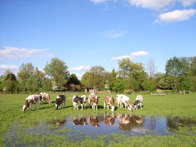 Farmland at Stratfield Turgis