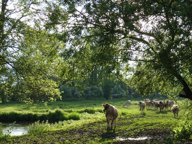 Farmland near Hartley Wespall