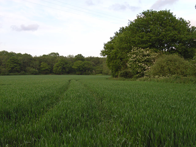 Farmland near Hartley Wespall
