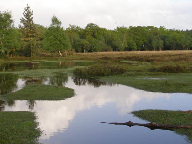 Waterlogged heathland's edge, New Forest