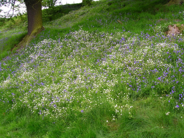 Bank of spring flowers by the River Derwent