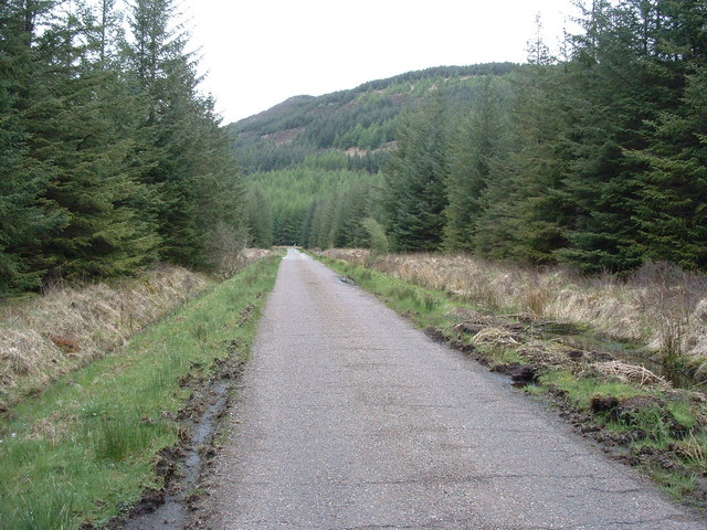 Road through forestry