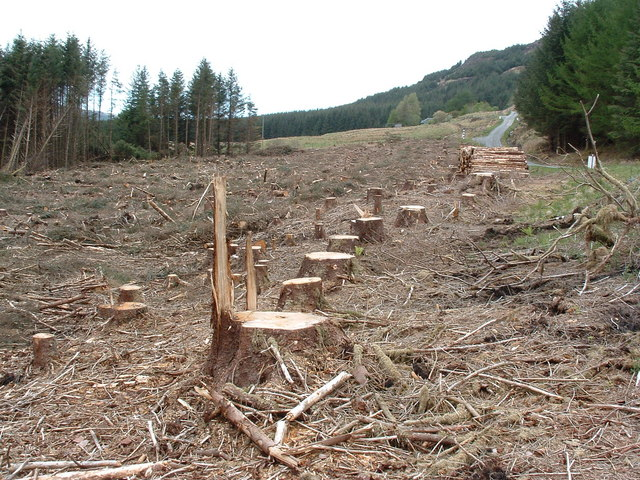Harvested trees