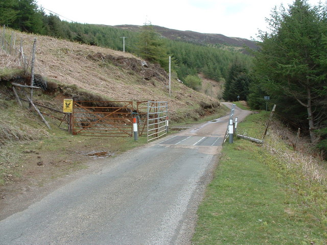 Cattle grid at the edge of the forest