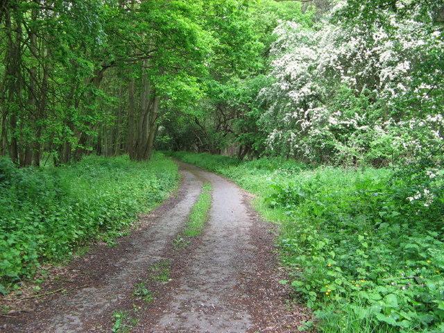 Hanger Hill Drive