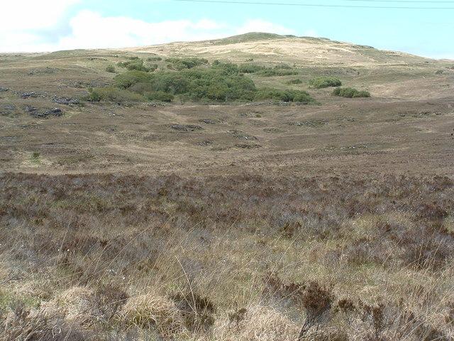 Woodland on Braigh a' choire Mhor
