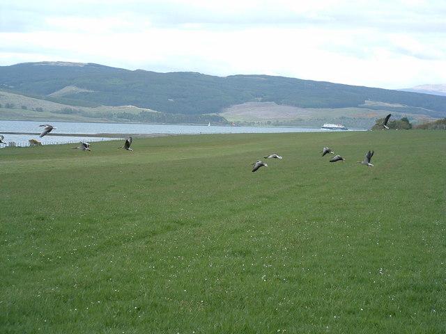 Gooseflight 10 taking off from Glenforsa