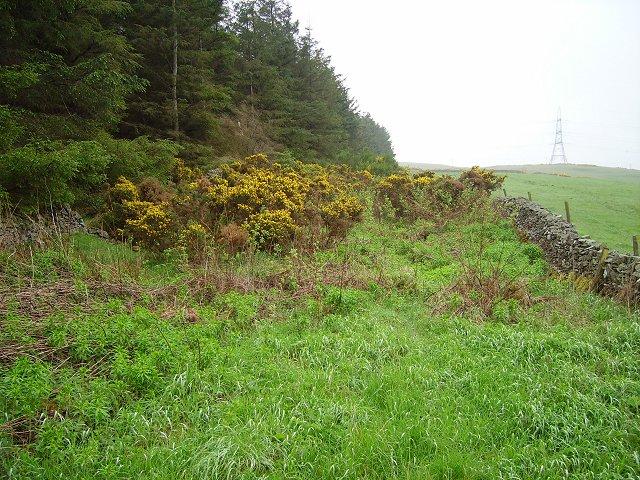 Overgrown track, Overhowden
