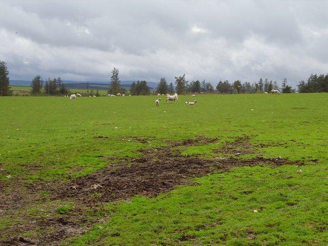 Sheep pasture, Brothershiels.