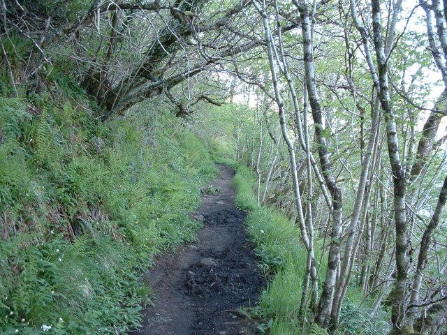 Muddy footpath