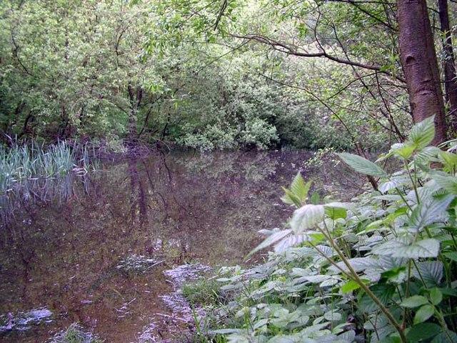 Newt Pond