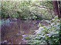 SJ9893 : Newt Pond by Stephen Burton