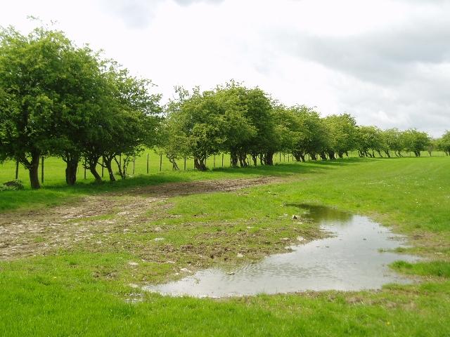 Farmland near Bowden