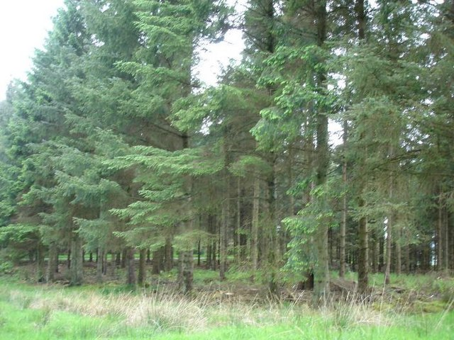 Clocaenog forest