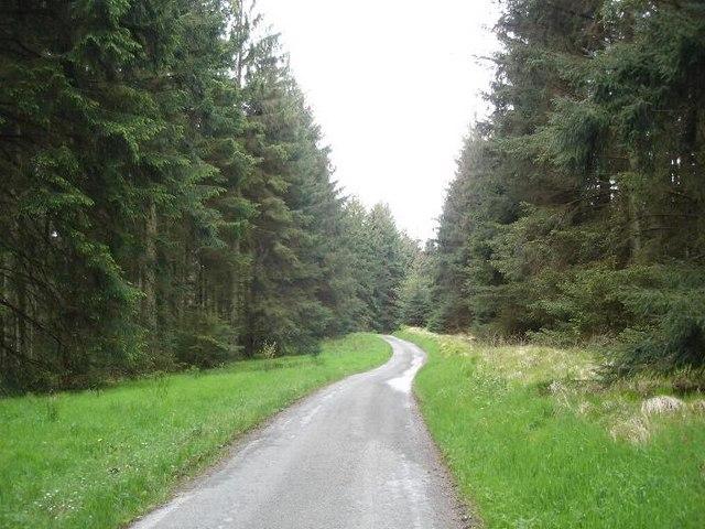 Clocaenog forest track