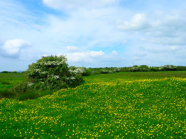 Buttercups and Earthworks, Hooe Level