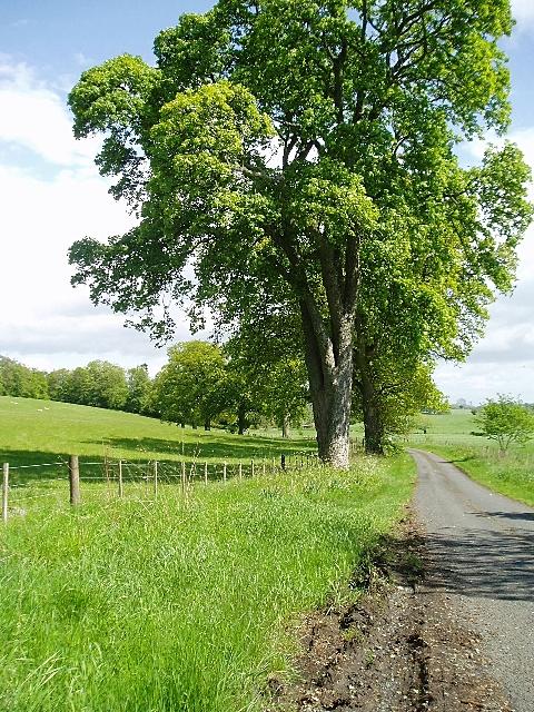Road to Lilliesleaf Nursery