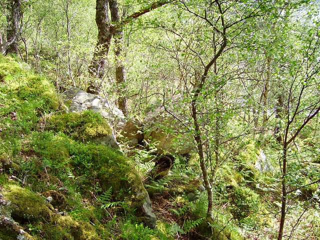 Woodland beside Loch Sunart