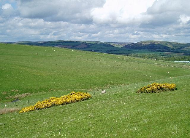 Sheep pasture above Lauder